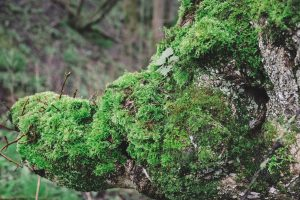 The_Power_Of_Forest_Bathing_Wootton_Park