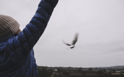 Letting Go, Why We Believe In The Healing Power of Dove Release
